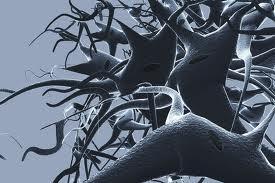 Εγκεφαλικοί νευρώνες